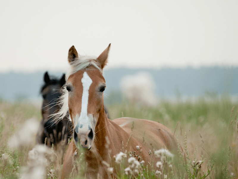 Do You Want to Be a Backyard Horse-Keeper? Five Questions To Ask Yourself