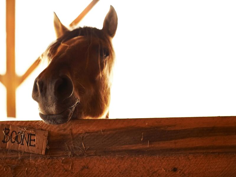 Horse Supplies on a Budget