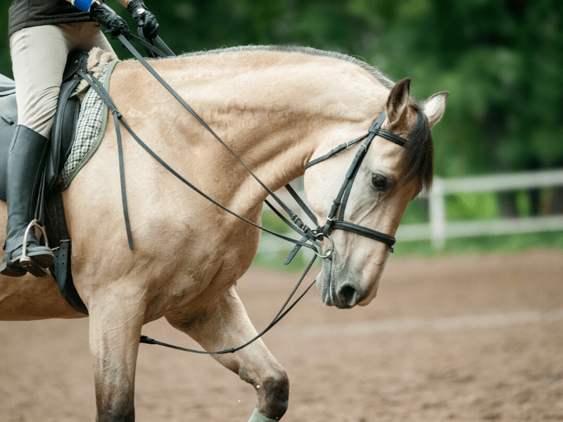 An Equestrian's Guide to Riding Horses on a Budget
