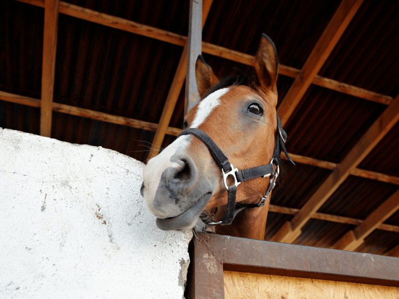 Horse Cost Case Study June 2020