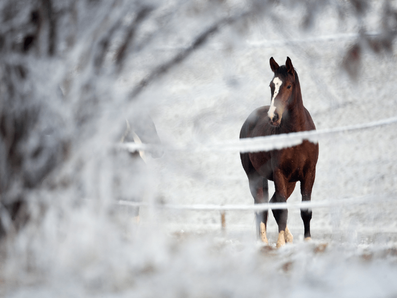 Tips to Keep Your Senior Equine Warm This Winter