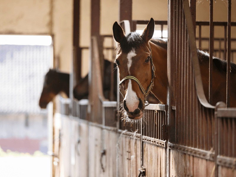 How to Know When It's Time to Change Barns