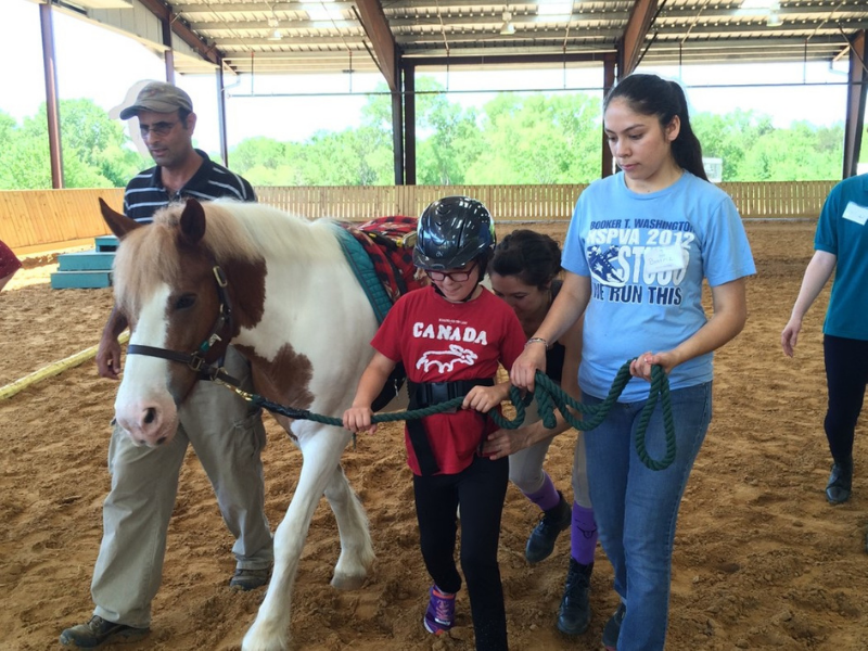 Does My Horse have the Characteristics to be a Therapy Horse?
