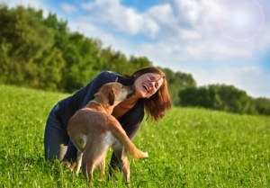 Hunde OP Versicherung