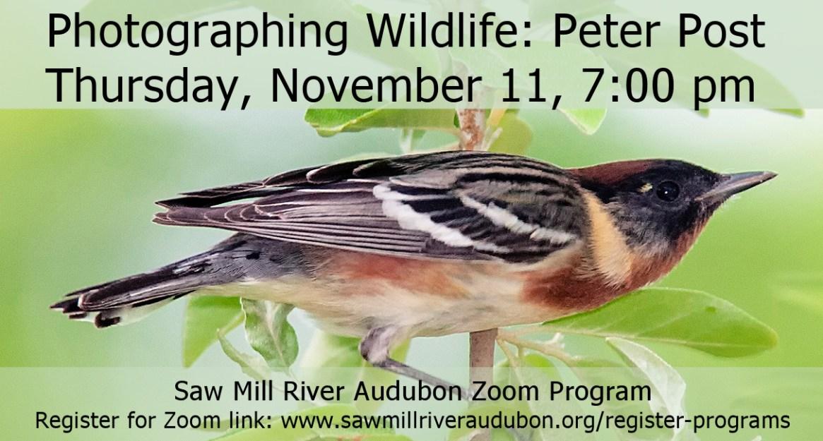 FB-Photographing-Wildlife-Peter-Post-Nov-11-2021-DRAFT