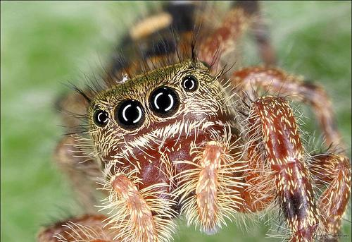 Another cute spider