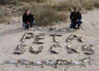 peta_rabbits