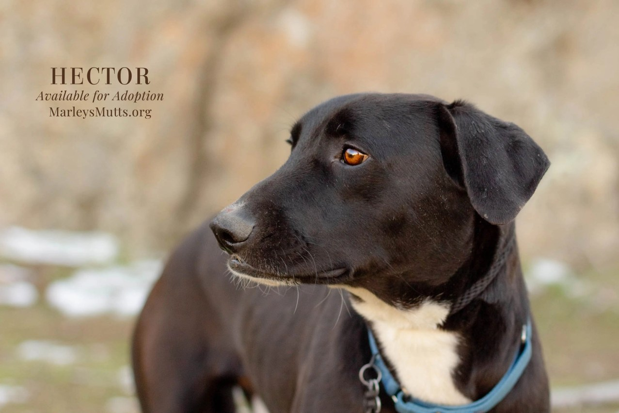 IMG_4668-Edit-Hector-Looking-Right-2048x1365