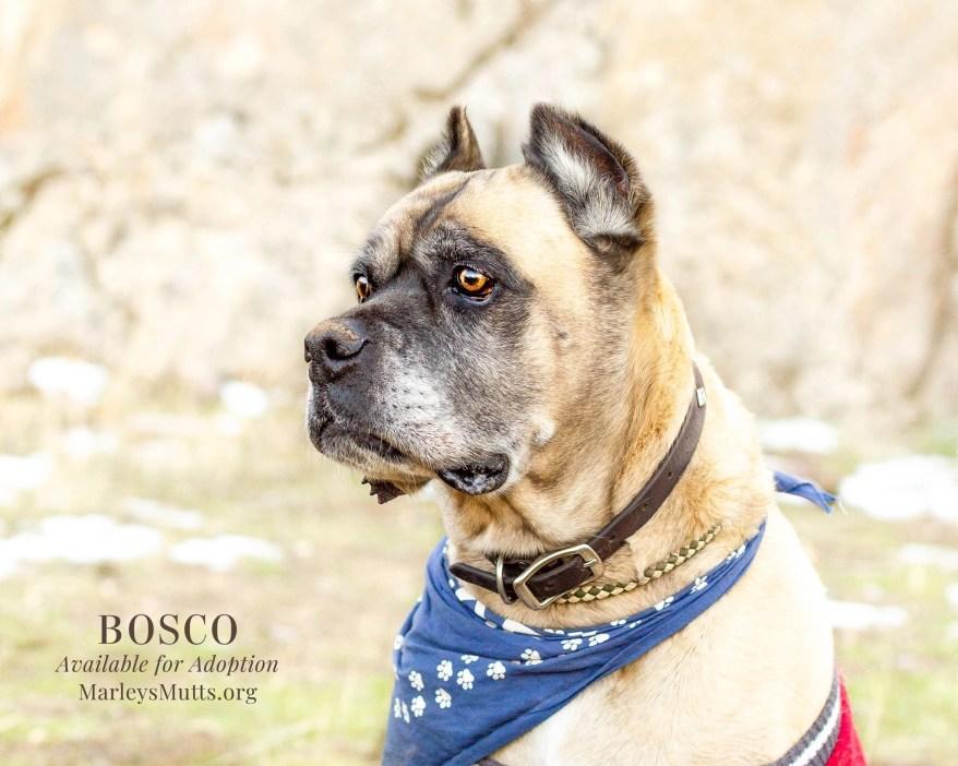 IMG_4849-Edit-Bosco-Looking-Right-2048x1639