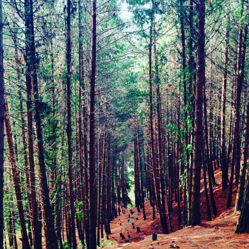 trees_mountain_nature_beauty