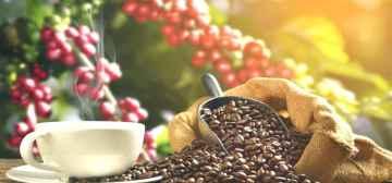 Ruta del Café y la Aventura