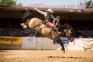 2018 Fiesta Rodeo