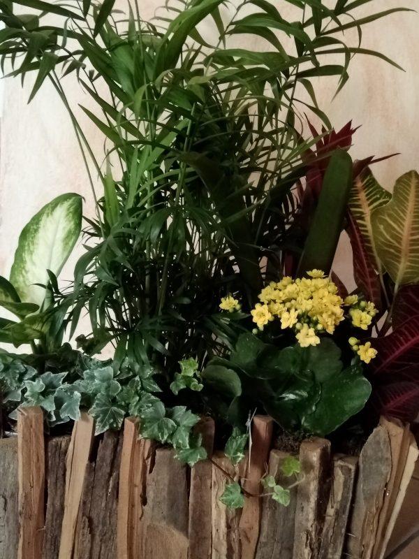 piante verdi appartamento