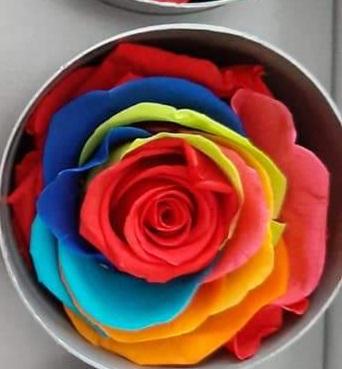 rosa stabilizzata vendita online