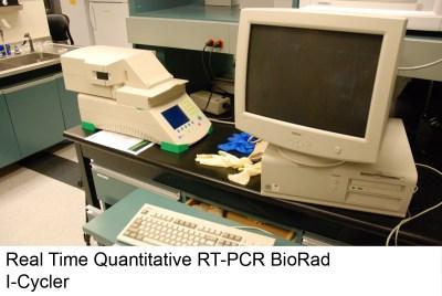 Real Time Quantitative BioRad Cycler