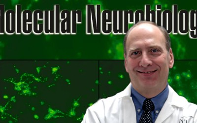 Albensi named Editor-in-Chief of Molecular Neurobiology