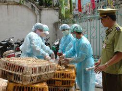 30.1.2017 Việt Nam cảnh báo nguy cơ bùng phát dịch cúm gia cầm – Anh (1)