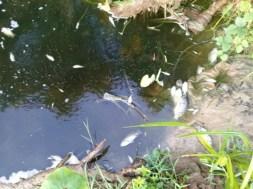 8.5 Cá chết bất thường ở khe Đá Mài