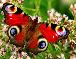 Makroaufnahme Schmetterling