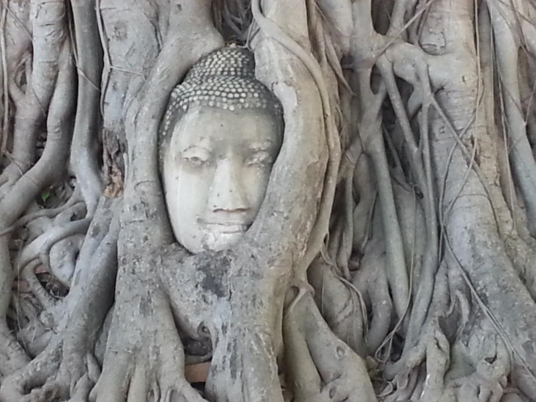 Buddha head in Ayutthaya