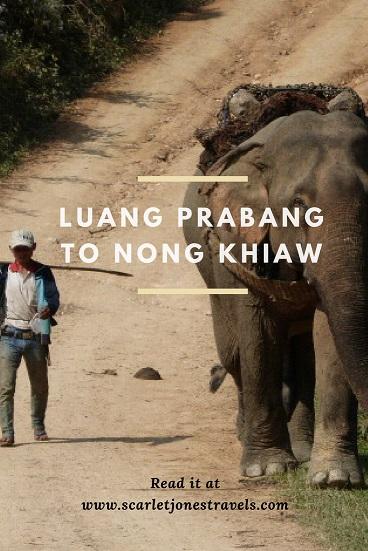 Pinterest elephant at Nong Khiaw
