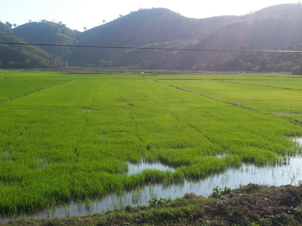 Lak Lake paddy fields