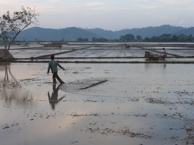 Lak Lake paddy fields