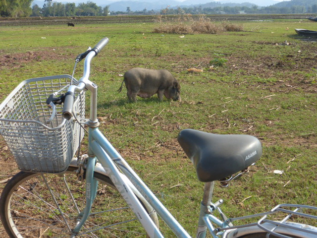 Lak Lake bicycle