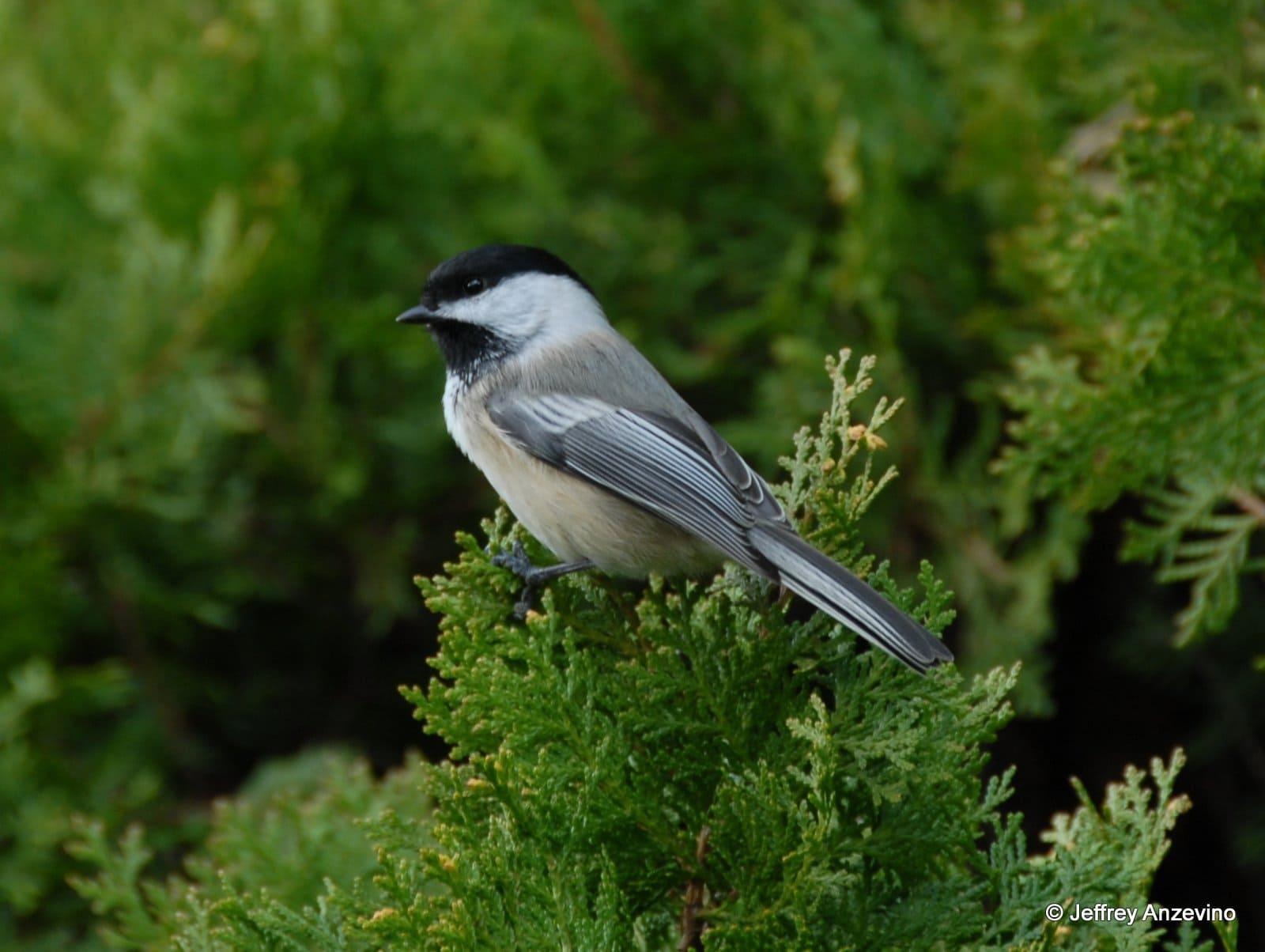 Bird Scavenger Hunt