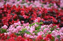 ScenicScape Landscaping, Lawn Care, and Irrigation - Featured images for Landscaping Your Spring Flower Beds
