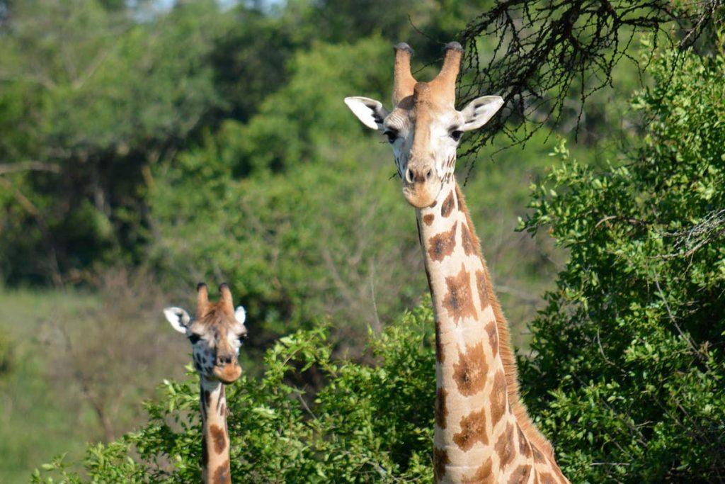Lake Mburo Wildlife Safari