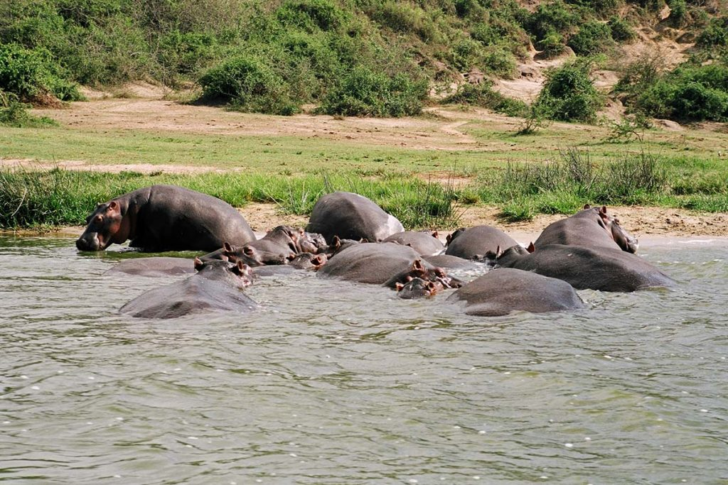 Gorillas & Wildlife Safari