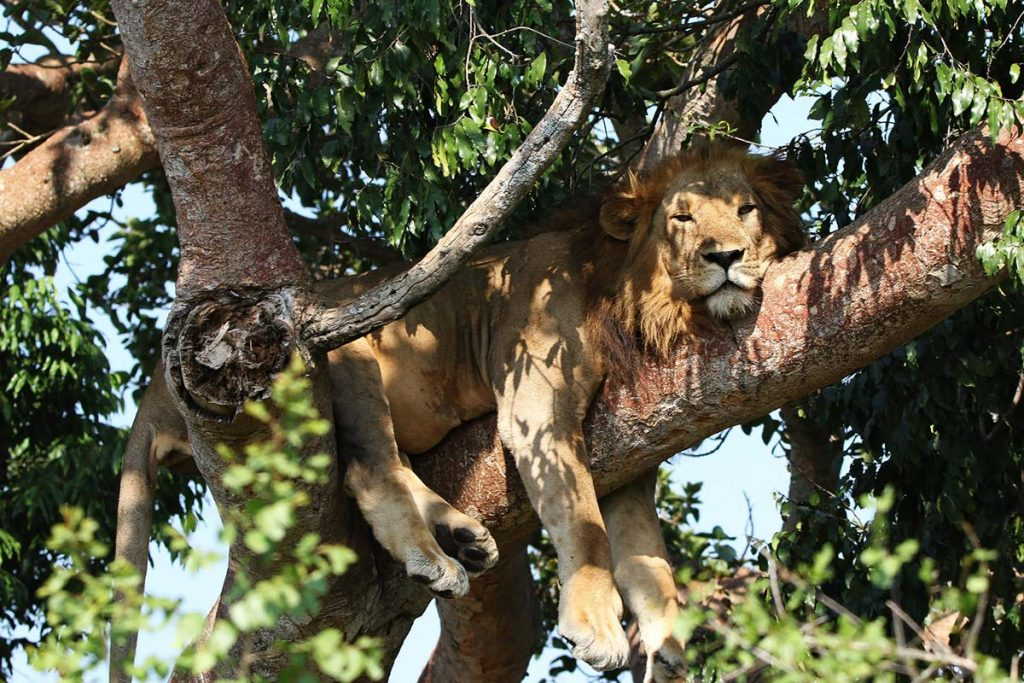 Queen Elizabeth Wildlife Safari