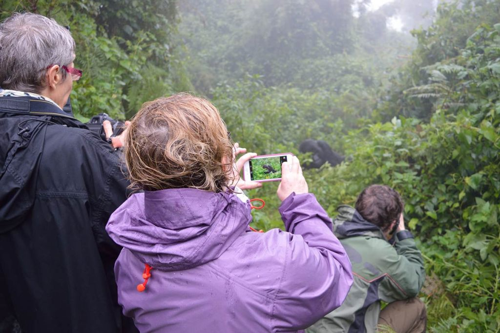 Gorillas, Great Migration & Big Five Safari