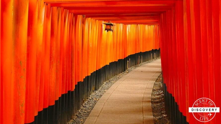 【京都】外国人に大人気の伏見稲荷大社で人無しの千本鳥居写真を撮影するには?