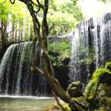 【熊本】暑い時期に涼めるスポット鍋ヶ滝&白川水源