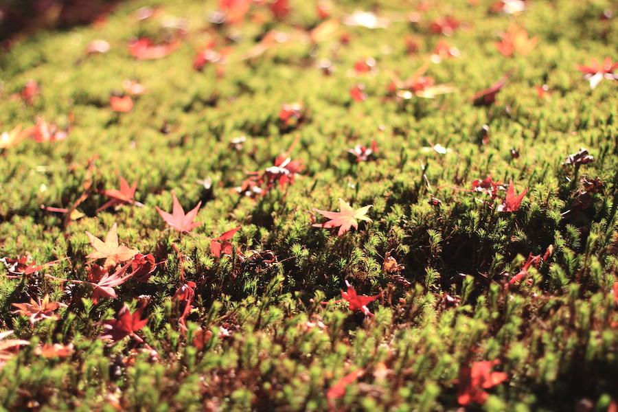eikando autumn2