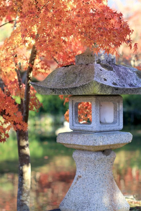 eikando autumn5