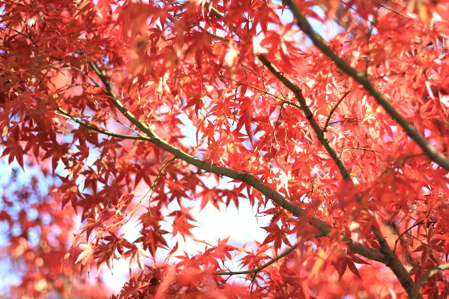 eikando autumn6