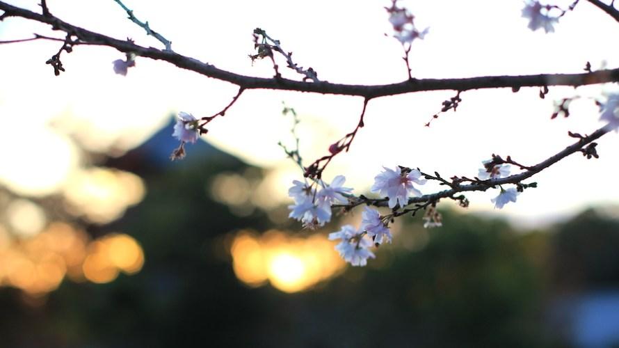 【愛知】地元名古屋で旅人になり寺院や名古屋グルメを楽しみました