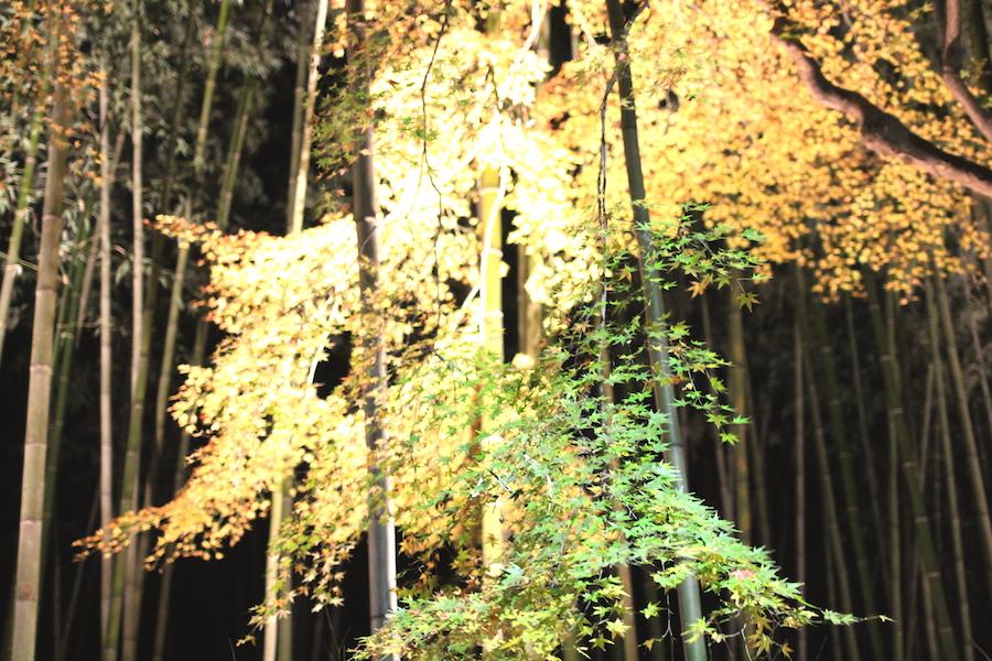 arashiyama hanatouro5