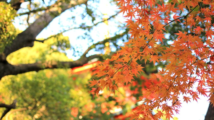 【兵庫】阪急阪神1dayパスで京都ー兵庫間をぐるっとお得にまわりましょう