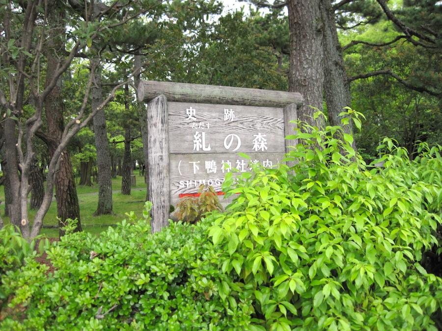 tadasu forest1