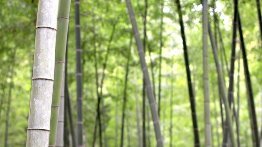 【茨城】日本三名園のひとつ偕楽園に行くベストシーズンは?