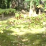 【千葉】成田山新勝寺へ行くなら絶対公共交通機関がおすすめ!