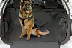 Hundegurt Schäferhund