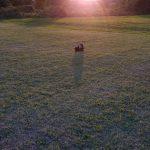 夕日と愛犬の画像でオリジナルジグソーパズルを作る
