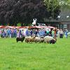 demostratie-schapendrijven
