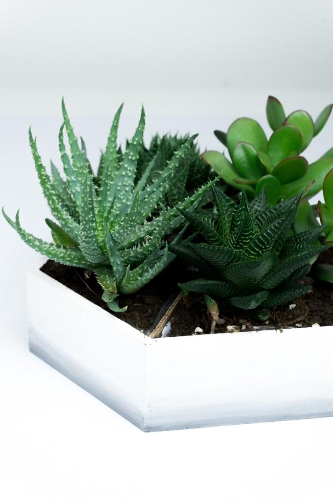 schereleimpapier DIY und Upcycling Blog aus Berlin - kreative Tutorials für Geschenke, Möbel und Deko zum Basteln – Mini Sukkulenten Garten