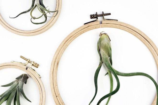 DIY Deko Tillandsien hängend im Stickrahmen Idee- schereleimpapier DIY und Upcycling Blog aus Berlin - kreative Tutorials für Geschenke, Möbel und Deko zum Basteln